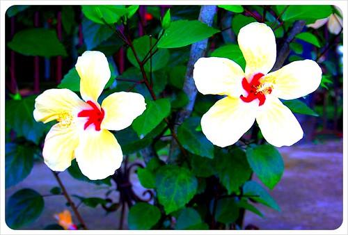Flowers in Cahuita Costa Rica