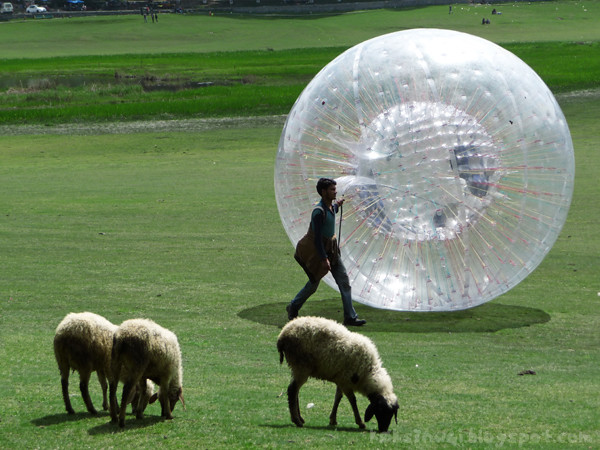 Sheep and Zorbing in Khajjiar