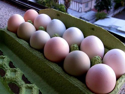 Huevos del campo