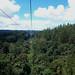 Reserva forestarl Arvì