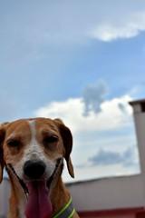 Happy (emanuelzalazar) Tags: dog mydog perro sonrisa smile 狗 笑