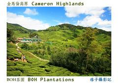 IMG_0971 (chamkhangwey) Tags: cameronhighlands teaplantation boh