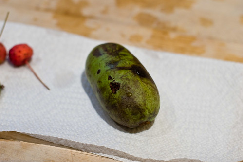 Edible Forest Gardens: paw paw