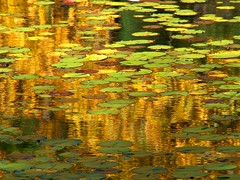 Variation on Monet 6 (Stanley Zimny (Thank You for 11 Million views)) Tags: park trees lake reflection tree fall nature water colors leaves automne catchycolors mirror leaf colorful colours seasons natural fallcolors autumncolors fourseasons monet ripples autumnal colorexplosion 4seasons