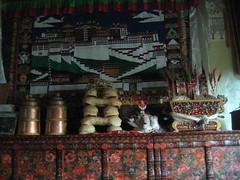 Rutok (nkdamtic) Tags: tibet kham