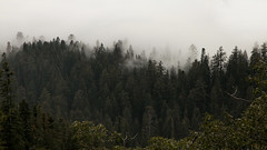 3020 (BurlapZack) Tags: vacation cloud fog clouds forest woods momanddad foggy roadtrip redwoods folks sequoia familyvacation canonef24105mmf4lisusm canoneos5dmarkii canoneos5dmkii