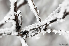 Snowy Branches (Don Komarechka) Tags: christmas winter snow toronto ontario canada cold macro tree ice fog canon frost branches christmaseve ef100mmf28macrousm canoneos5dmarkii