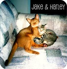Jake & Harley