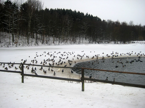 Viele Enten …