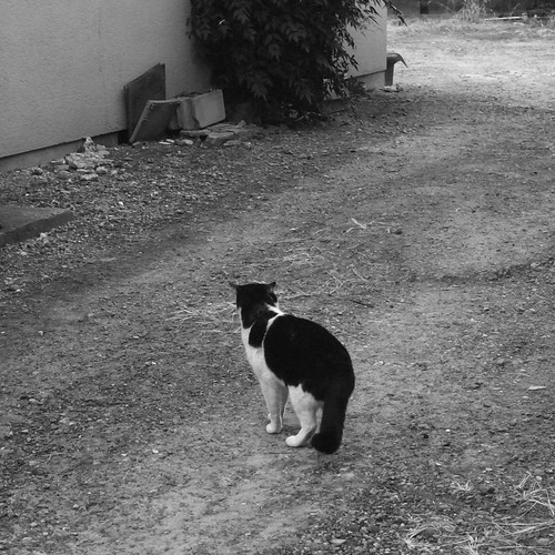 Today's Cat@2010-01-18