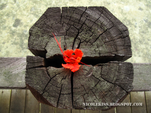 flower and log