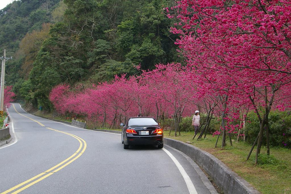 武陵的粉紅世界