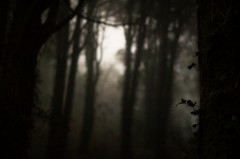 (t3mujin) Tags: d70 portugal sintra forest trees dark gloomy haunted leaves blur fav10 fav25 fav20 fav30