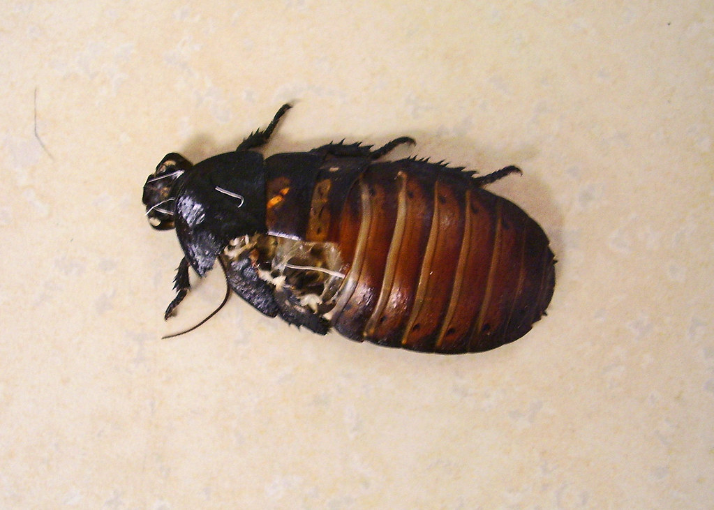 Cockroach Facts
