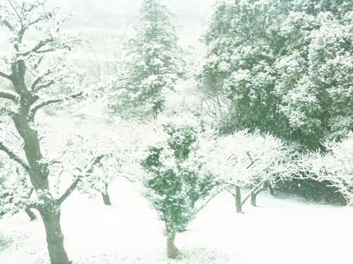 ごっつい雪ですわ。家が坂の上じゃなければ喜べるかも。