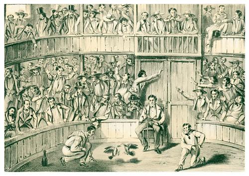 016-Pelea de gallos en Cuba-Álbum pintoresco de la Isla de Cuba- 1853