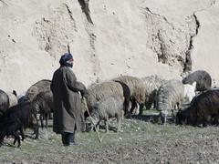 DSC09229 (huxley1312) Tags: afghanistan sharif mazare