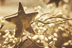 (56/365) Fading Star