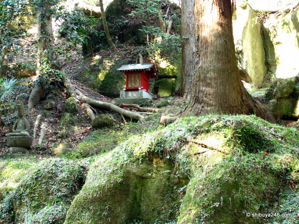 I liked this (mini temple?) depiction in the mossy grounds. The red against all of the shadowed green was a great scene. The Canon Powershot did not do a bad job, but I would like to see what the Nikon could have done here to get some better contrasts. I am sure that red would have jumped off the page and the greens in the foreground would have sat back a bit.