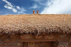 baudchon-baluchon-titicaca-IMG_8843-Modifier