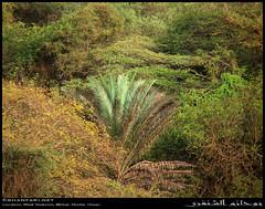 Wadi Shaboon, Dhofar (Shanfari.net) Tags: winter summer nature lumix raw natural panasonic oman wadi fz  zufar rw2 salalah sultanate dhofar shabon  khareef   mirbat         governate shaboon   dofar fz38 marbat  fz35 dmcfz35
