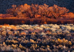 Wild Radiance (Zack Schnepf) Tags: california morning trees red field grass sunrise warm sage shrubs luminous owensvalley