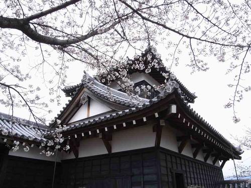 大和郡山お城まつり-23