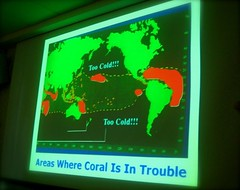 IMG_7420 coral at risk
