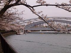 桜宮橋と桜