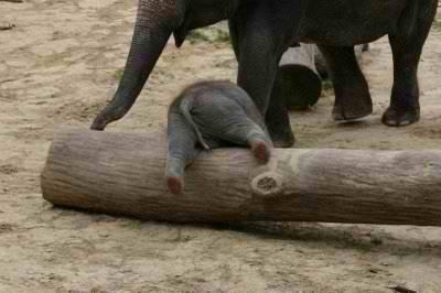 binatang lucu http://asalasah.blogspot.com/