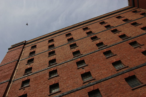 Prison building and pigeon