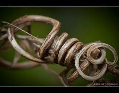 Nature's Knot (JSB PHOTOGRAPHS) Tags: macro nikon d2x vine knot micro 60mm nikkor grape natures
