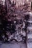 tikal-33 (duque molguero) Tags: art architecture temple arquitectura ancient rainforest ruins king arte pyramid mask maya guatemala selva antigua mayanruins jungle ruinas tikal scanned rey monumentos civilization jaguar archeology fresco templo reyes clasico piramide peten máscara jaguares prehispanic arqueologia estela jungla kukulkan mayab arqueologica prehispanico bajorrelieve civilización arqueologico estelas mundomaya glifo glifos