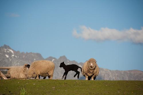 a small sheep farm outside