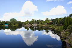 Reflections of Animal Kingdom (Todd Hurley (Todd_H)) Tags: reflection wideangle mickeymouse 5d waltdisneyworld themepark animalkingdom park disneysanimalkingdom buena uwa lakebuenavista lake canon photography fun vista theme canon5dmark2 family disney walt canon5dm2 thhphotography toddhurley florida 5dm2
