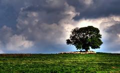 Il pastore con le pecore (socrates197577) Tags: primavera nikon nuvole 1001nights paesaggi animali hdr paesaggio nuvoloso photomatix platinumheartaward mygearandme ringexcellence dblringexcellence tplringexcellence