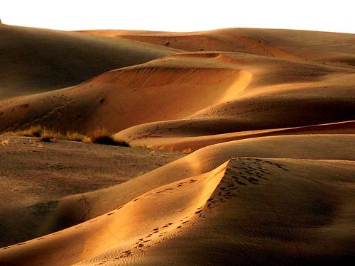 dune du desert du thar india