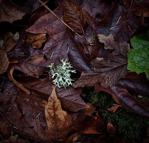 Lichen on the trail