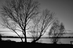 SOLITUDINE (Elias Arcos Photo) Tags: trees sunset blackandwhite italy lake blancoynegro water alberi contraluz lago atardecer see agua eau wasser europa europe italia tramonto sonnenuntergang mantova acqua biancoenero controluce backlighting mantua gegenlicht contrasto schwarzundweiss blancheetnoir bame albores