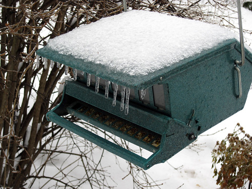 Frozen Bird Feeder