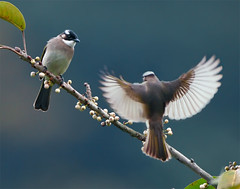 #539  (I'm Coming!) (John&Fish) Tags: wild bird nature wow taiwan best bej