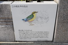 091119_d_高知鏡川_022