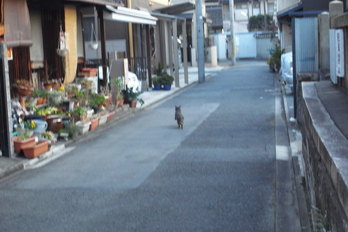 Today's Cat@2010-01-31