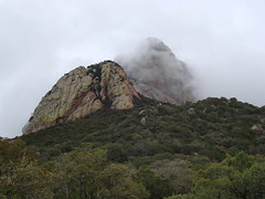 in the mist (azhiker_grrl) Tags: trees arizona mist mountain nature weather rock fog pine clouds outdoors native nation foggy peak tribal hike baboquivari tohonooodham pimacounty