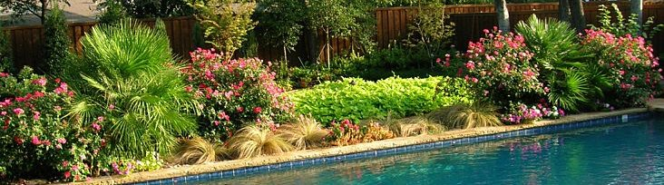 backyard design landscape