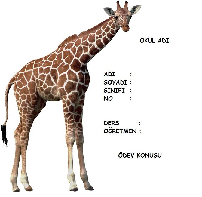 4356728595 e1286ceeb2 o zürafa resimli ödev kapakları