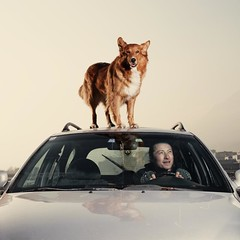 (Gebhart de Koekkoek) Tags: light test dog car canon ride mischa driver 5d stephan elinchrome rangerq