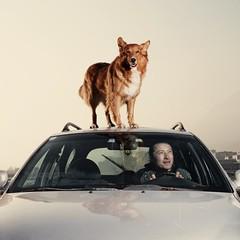 (Gebhart de Koekkoek) Tags: light test dog car canon ride mischa driver 5d stephan elinchrome rangerq