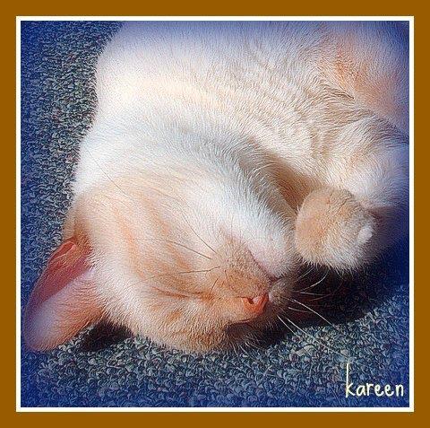 nollsleeps