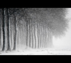 Blizzardous sunday (Danil) Tags: trees winter snow holland ice netherlands dutch boer landscape nikon wind zwartwit daniel tag sneeuw snowstorm nederland boom tele farmer sight groningen wintertime blizzard januari weiland reitdiep landschap 2010 d300 platteland sneeuwstorm bomenrij snowcape sneeuwjacht wierumerschouw adorp